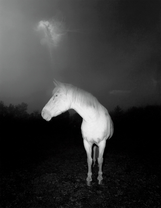 White Horse in Fog, 1979